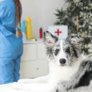 """繁盛する動物病院になる""""はじめの一歩""""補助金を活用した医療機器導入のススメ"""